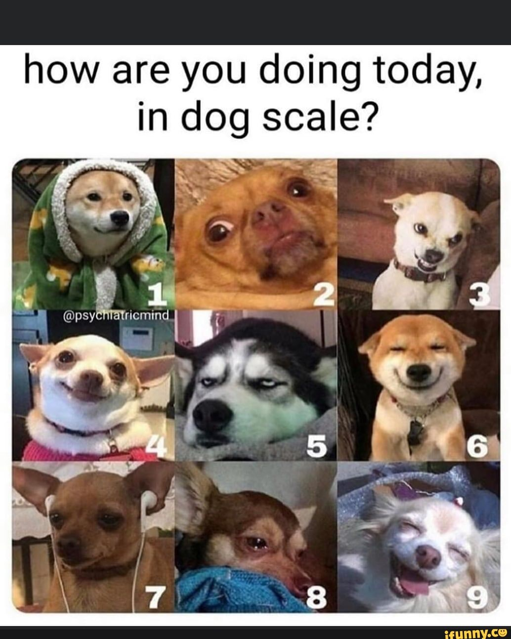 How Are You Doing Today In Dog Scale Ifunny