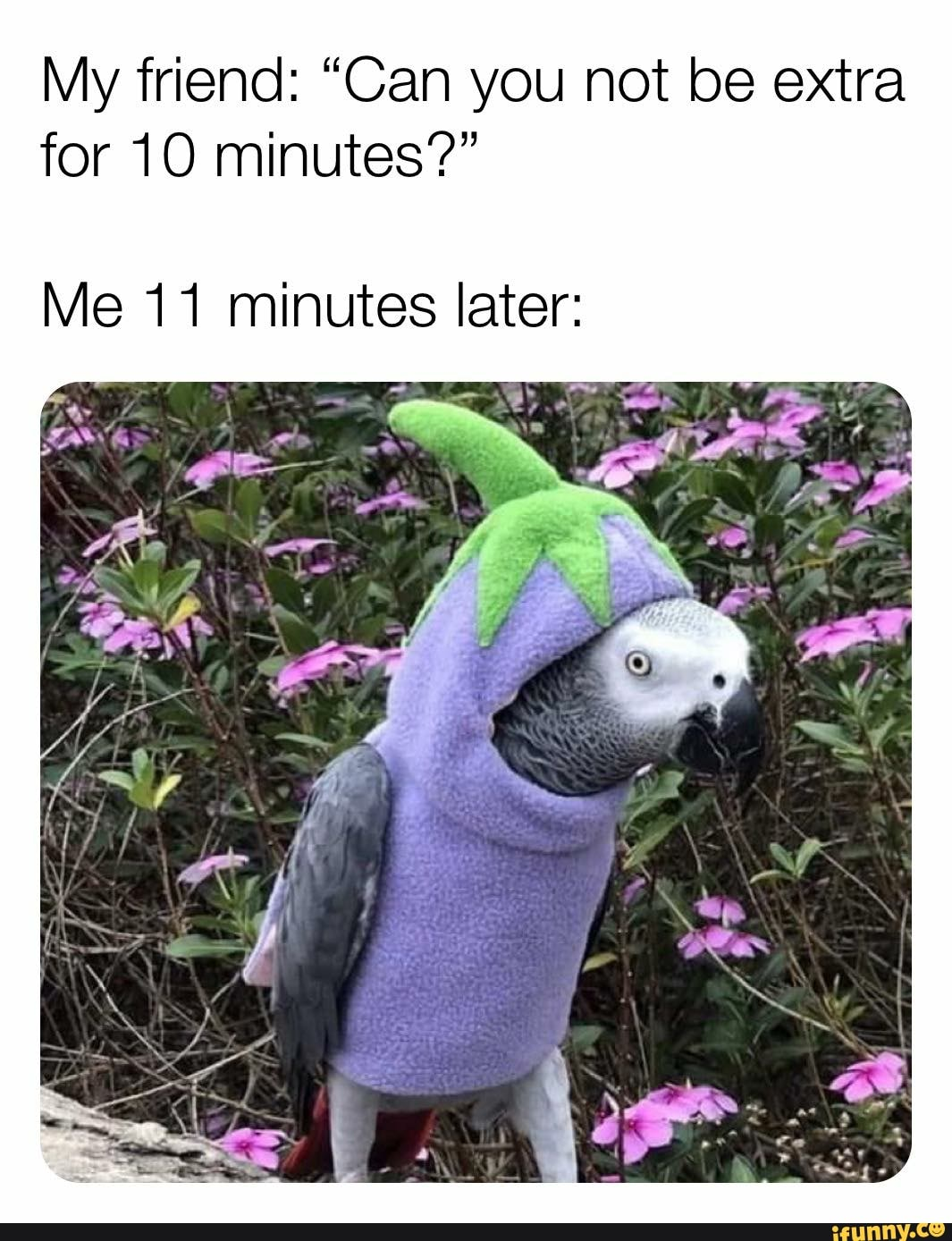 My friend: Can you not be extra for 10 minutes? Me 11 minutes later (bird in a vegetable costume)