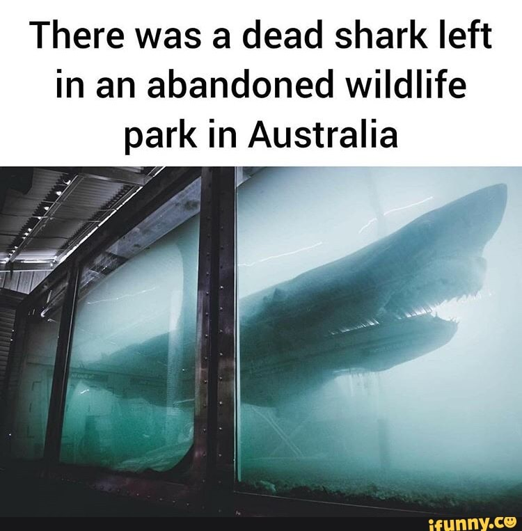 There Was A Dead Shark Left In An Abandoned Wildlife Park