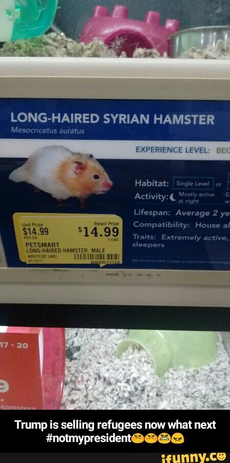 Long Haired Hamster Petsmart 70