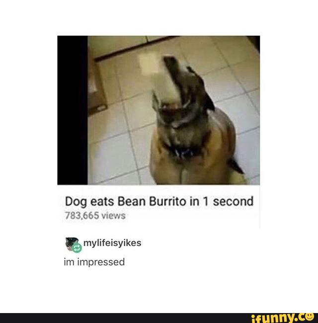 Dog Eats Bean Burrito In 1 Second 783 665 Wows Mylifeisyikes Ifunny
