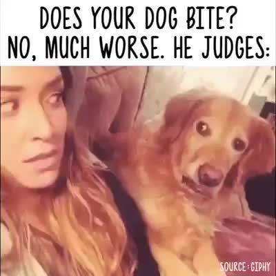 DOES YOUR DOG BITE?, N0, MUCH WORSE  HE JUDGES: