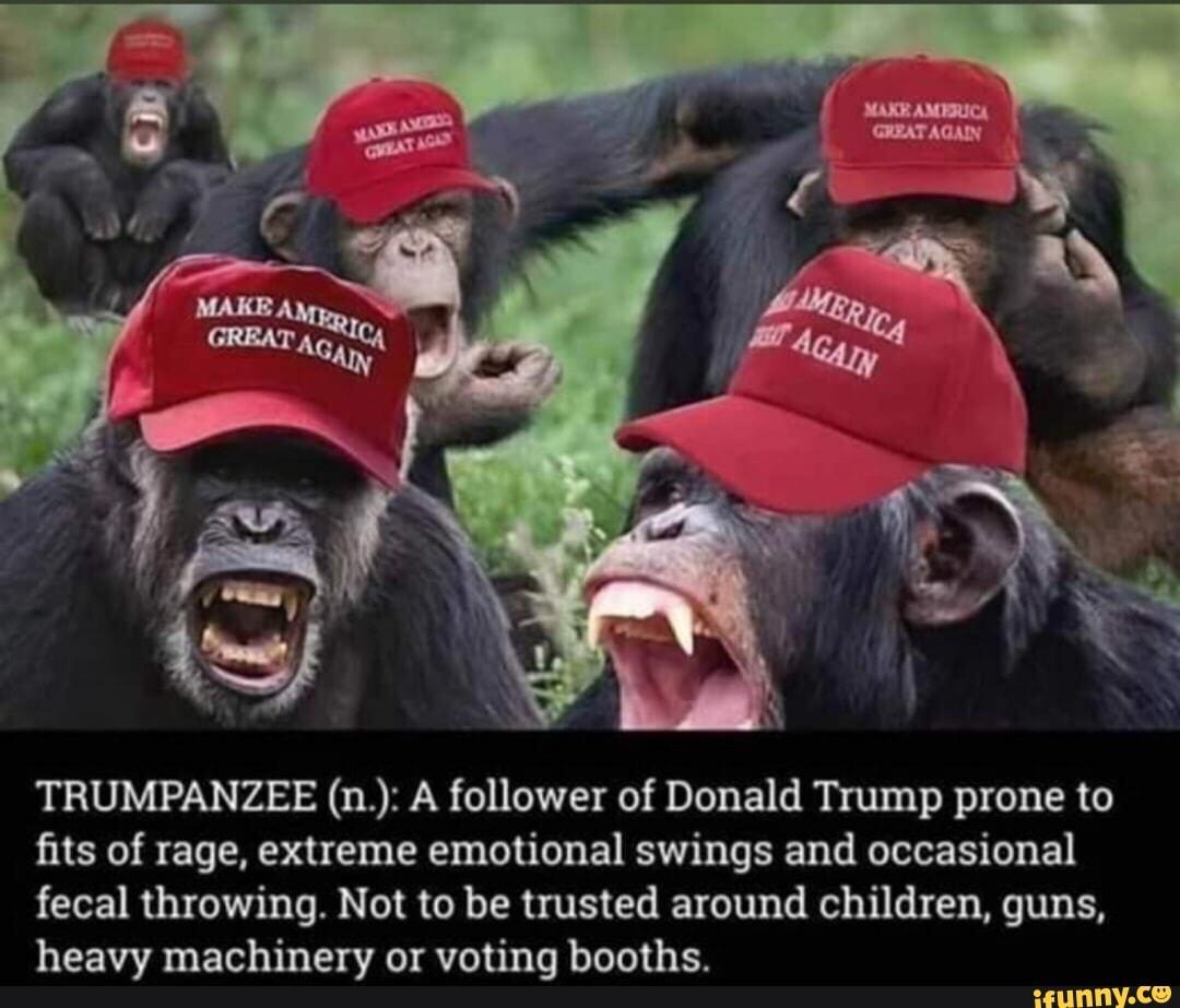 Image result for trumpanzee jokes