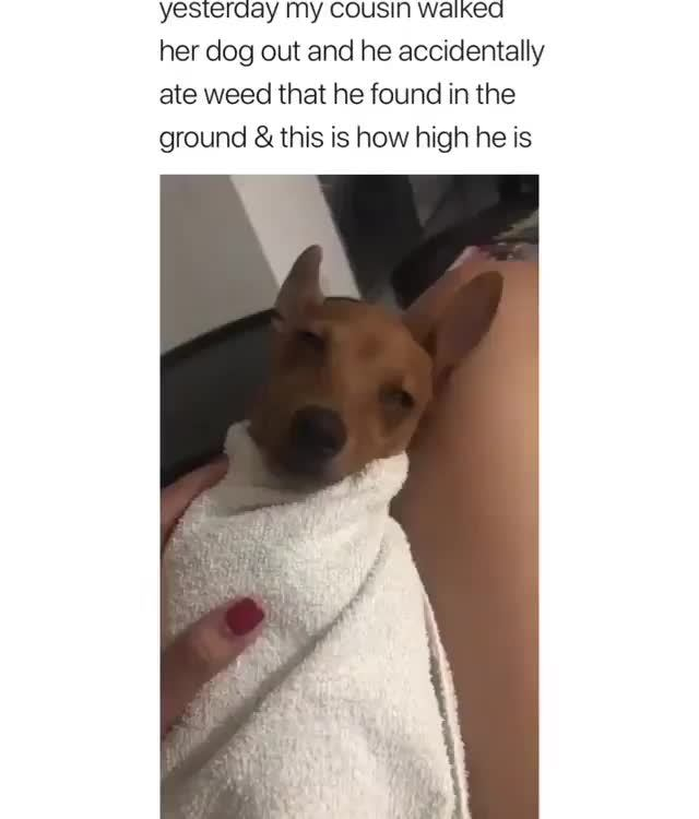 Dog Out And He Accidentally Ate Weed