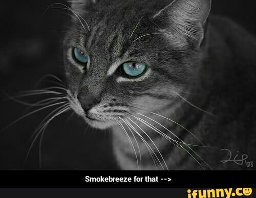 Https Ifunny Co Meme 2 Use I Puked In The Gar Now Theyell Find
