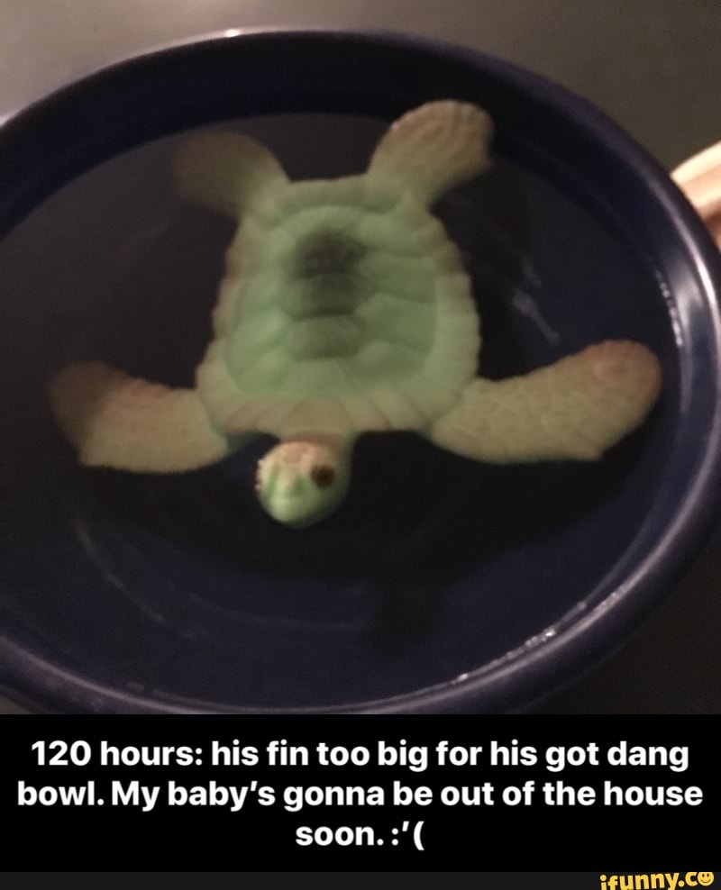 120 hours: his fin too big for his got dang bowl  My baby's