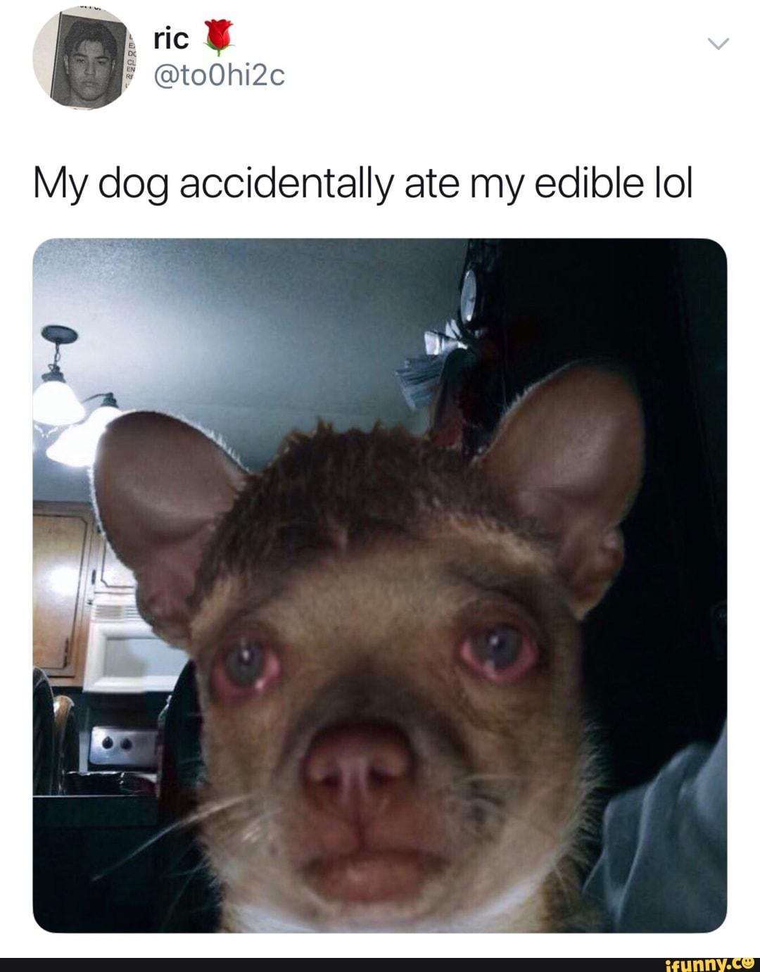 Dog Accidentally Ate My Edible Ioi Liv