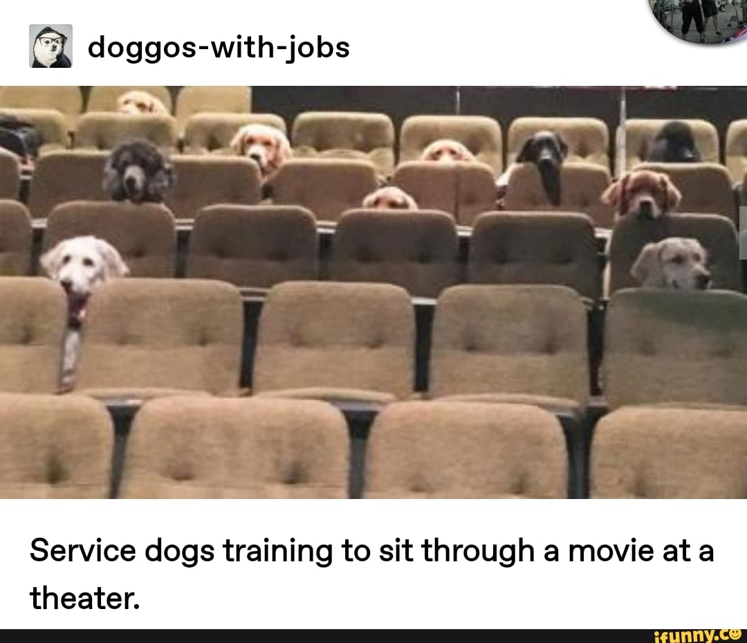 fl doggos-with-jobs Service dogs training to sit through a movie at a theater.