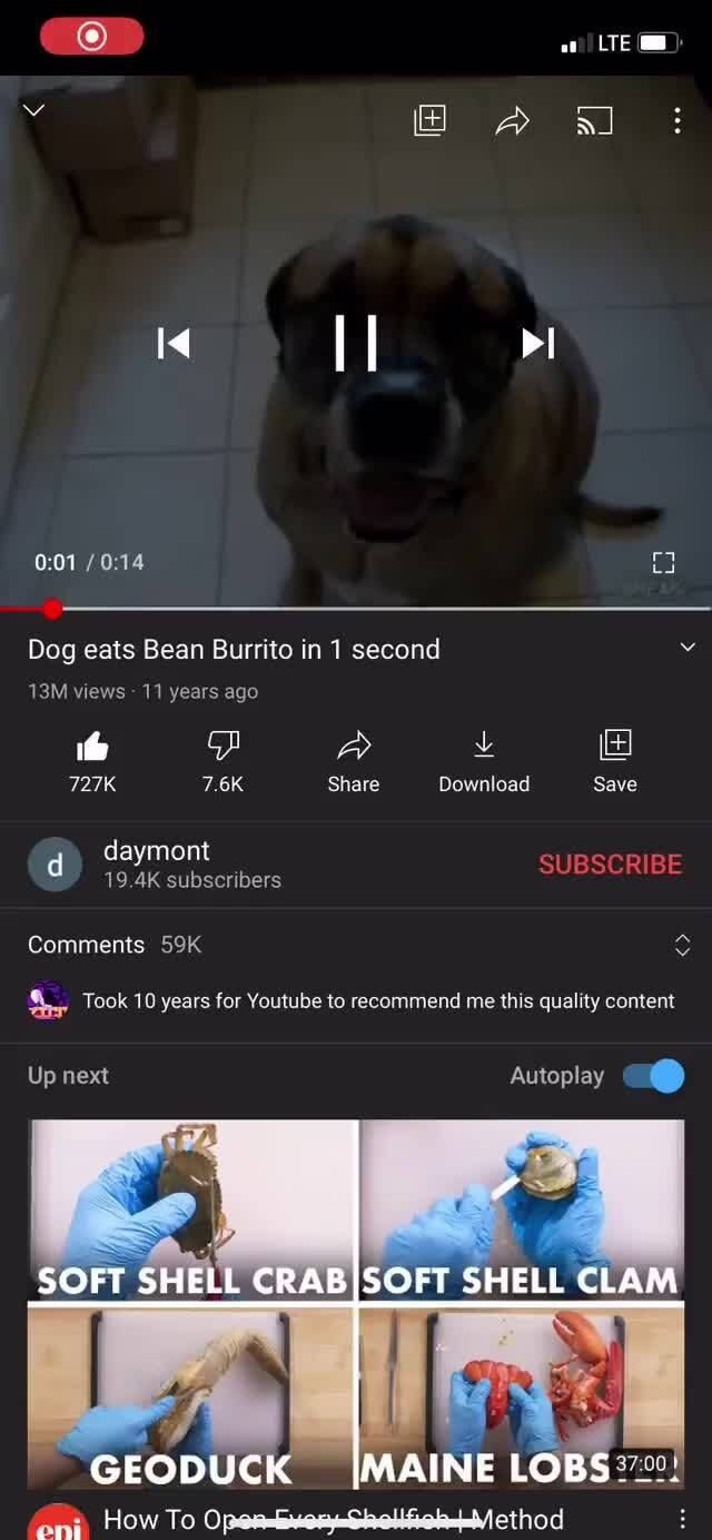 Dog Eats Bean Burrito In 1 Second Views 11 Years Ago 727k 7 6k Share Download Save Subscribe D Daymont 19 4k Subscribers Comments Took 10 Years For Youtube To Recommend Me This Quality