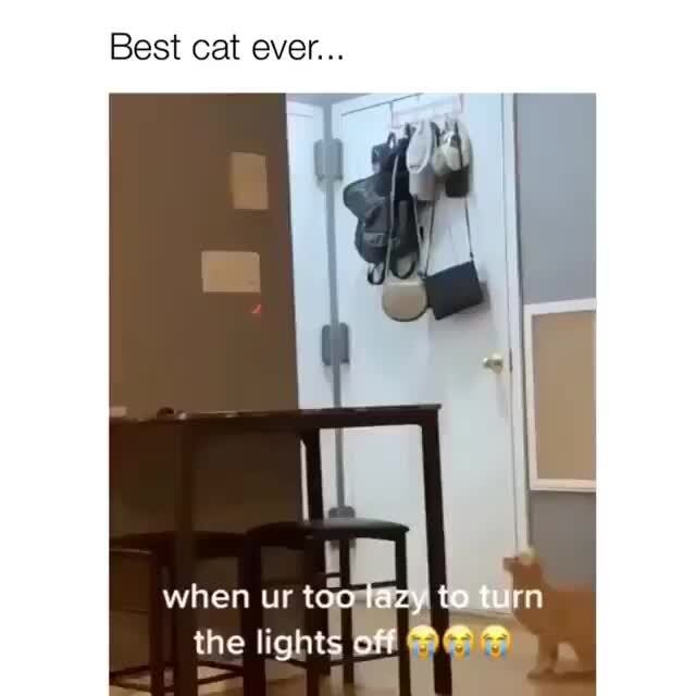 @themisslizzy On Instagram